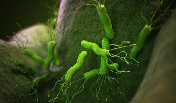 инфекция хеликобактер пилори